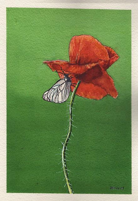 Poppy 18