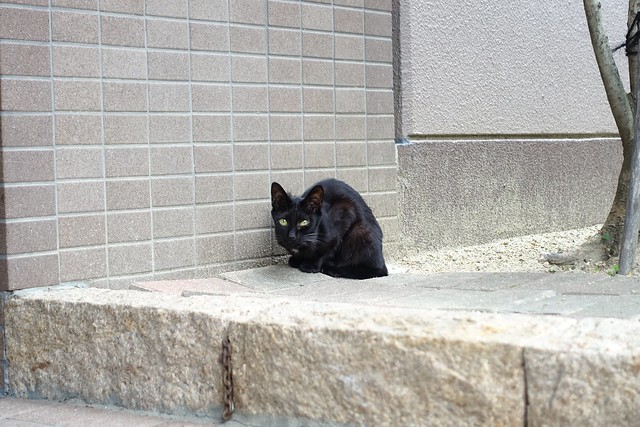 Today's Cat@2019-06-26