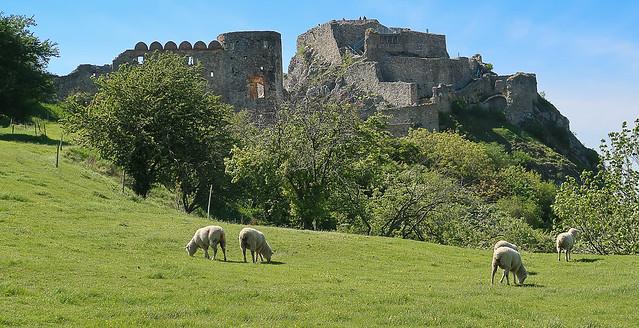 019May 08: EcoSheeps on Devin Castle