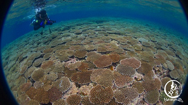 サンゴの絨毯