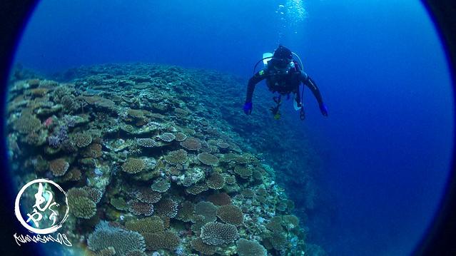 サンゴに癒されました。