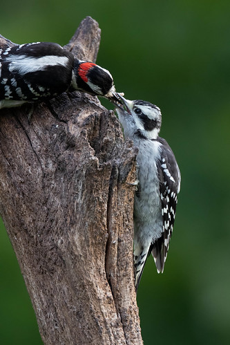 Feeding Junior | by Rob & Amy Lavoie