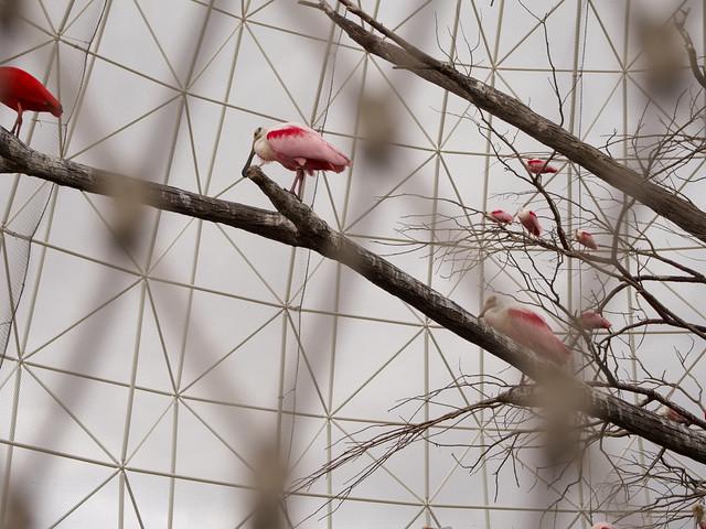 lattice and birds