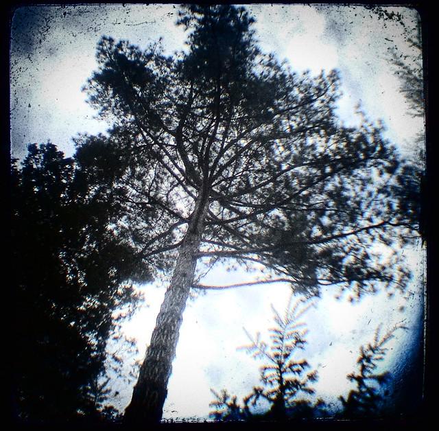starflex ttv, trees