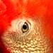 DSCN4703 lovely redhead