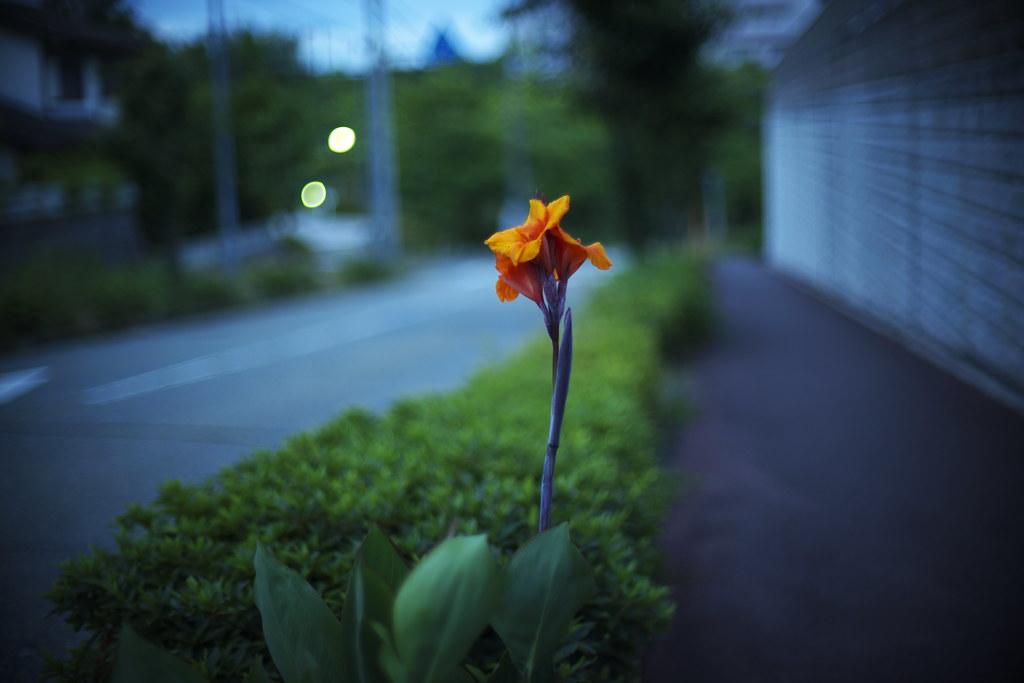 sidewalk canna 4:47 a.m.