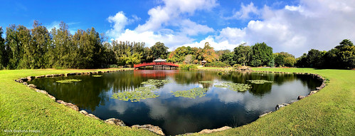 water clouds landscape landscapes pond australia wideangle waterlilies nsw japanesegardens botanicgardens iphone midnorthcoast iphonephotography iphonepanorama coffharbour northcoastregionalbotanicgardens iphonex shotoniphone appleiphonex appleiphonexpanorama iphonexpanorama iphonexbackdualcamera