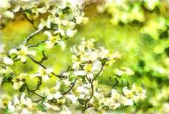 Dogwood Springtime