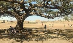 Under the Acacia, Eritrea