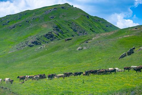 armenia norkarachinar kalbajardistrict azerbaijan mountainsview nagornokarabakh