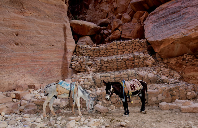 Petra, Jordan, June 2019 245
