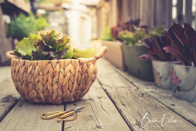 ~When you plant lettuce...