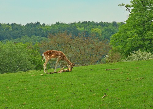 trees england green nature field grass landscape unitedkingdom derbyshire meadow olympus deer nationaltrust omd calke calkeabbey