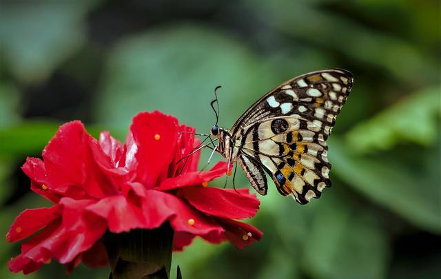 Butterfly............