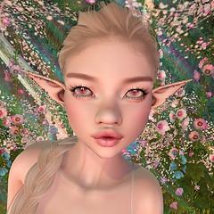 Callipygian: Daisy Hourglass Closeup