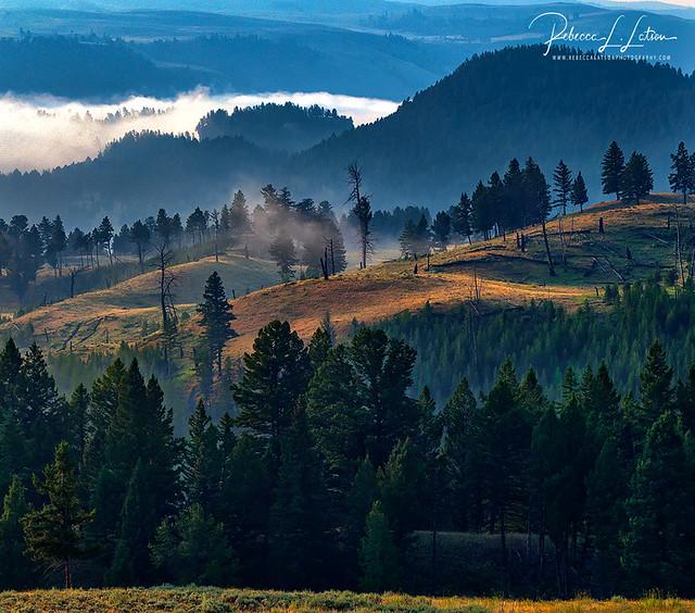 Morning In Yellowstone