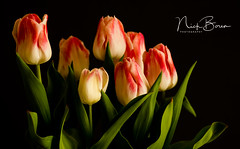 Wooden Shoe Tulip Art