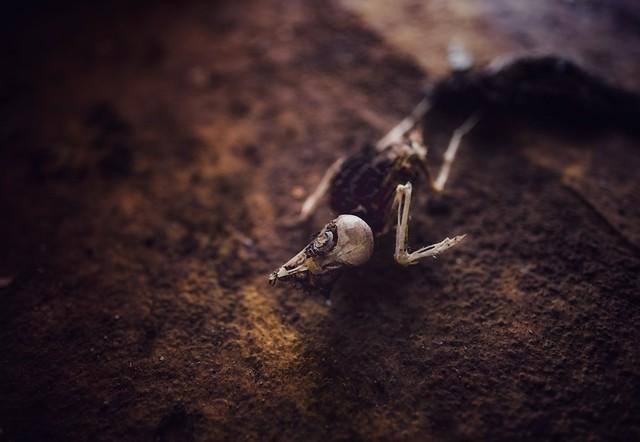 Dead bird...