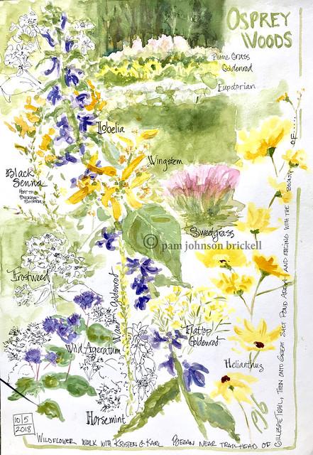 Wildflower Walk II