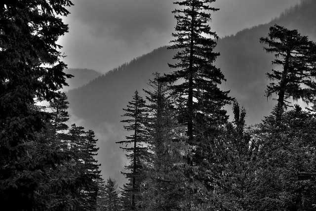 Views Seen at the North Cascades Visitor Center (Black & White)