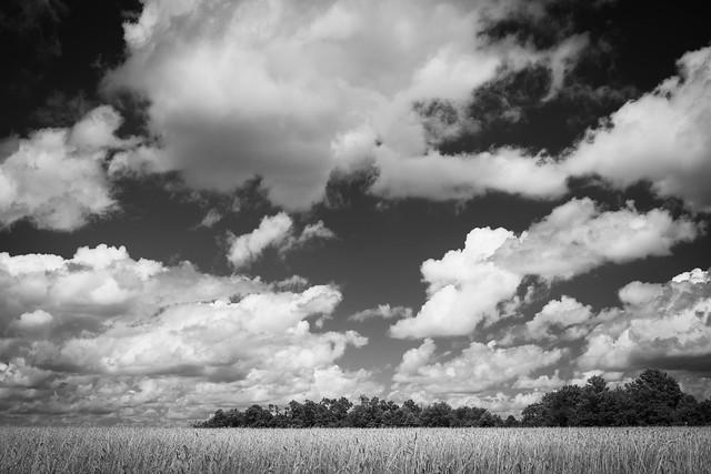 Cloudscape Monochrome