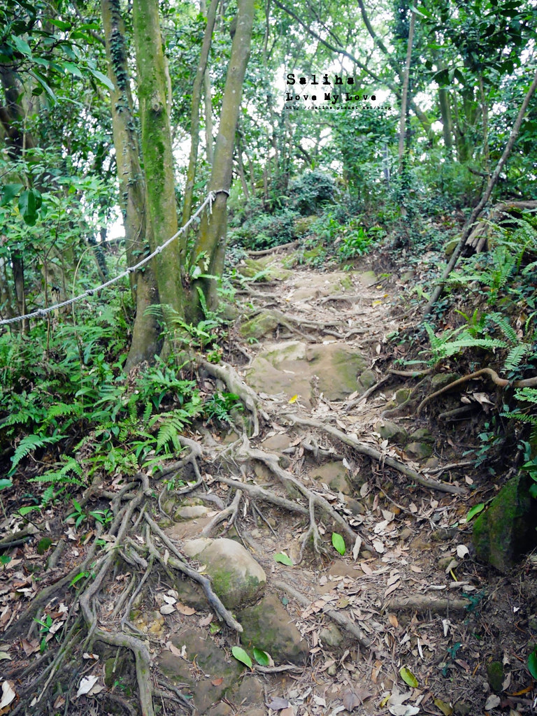 三峽一日遊景點推薦好拍必拍必玩鴛山步道怎麼去花費時間 (5)
