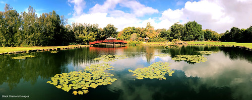 japanesegardens northcoastregionalbotanicgardens coffharbour nsw midnorthcoast australia pond waterlilies botanicgardens clouds landscape landscapes water iphonexbackdualcamera iphone iphonex appleiphonex iphonephotography shotoniphone iphonepanorama iphonexpanorama appleiphonexpanorama wideangle