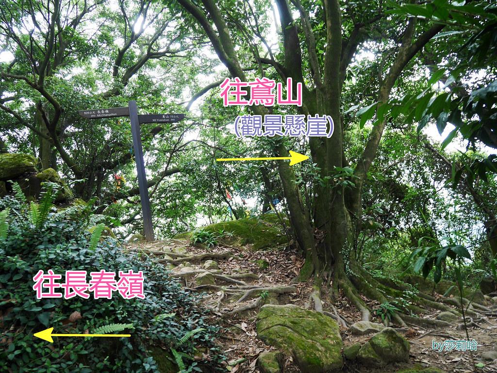 三峽一日遊景點推薦好拍必拍必玩鴛山步道網美景點
