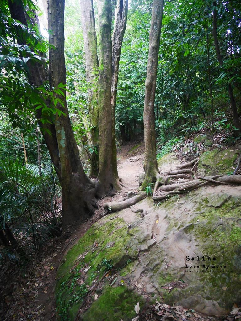 三峽藍染公園附近景點鴛山福德坑山爬山登山步道 (2)