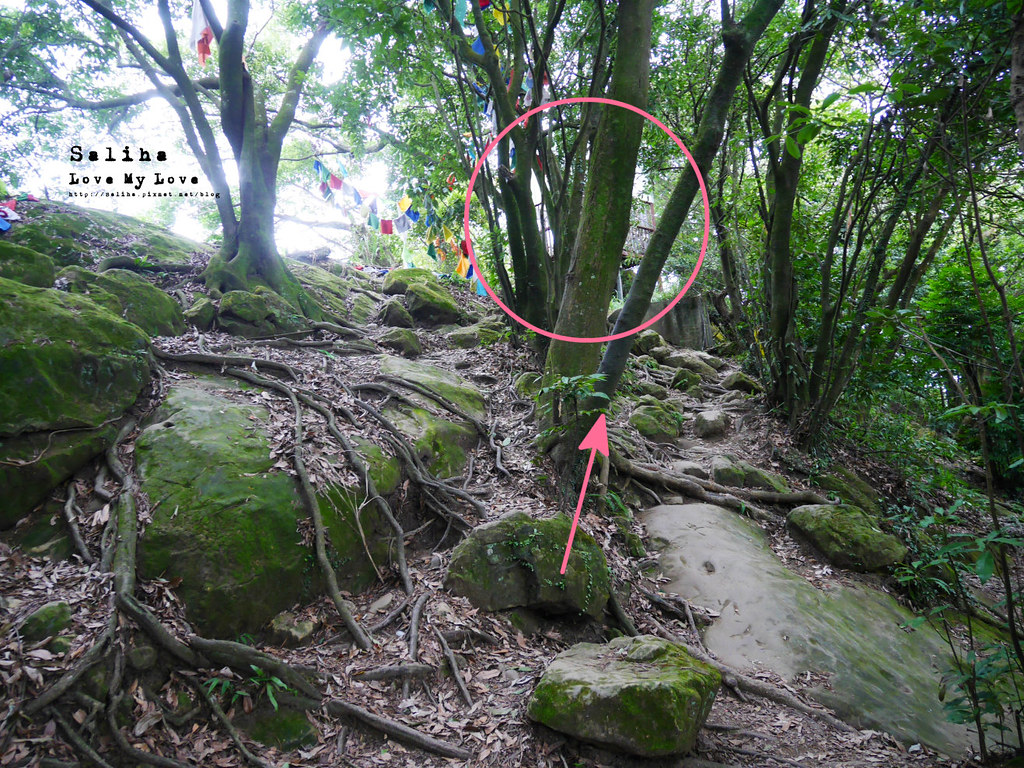 三峽一日遊景點推薦好拍必拍必玩鴛山步道怎麼去花費時間 (9)