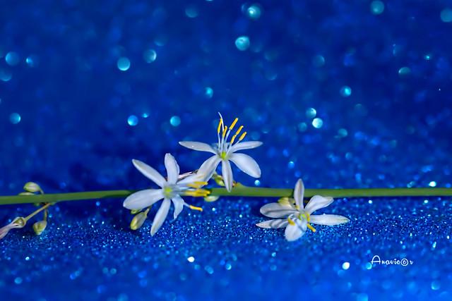 Flores de las cintas o lazos del amor