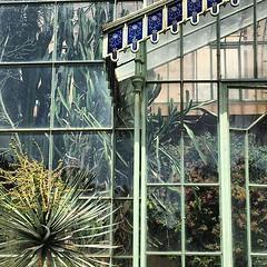 #Buongiorno Sapienza con una foto della Serra monumentale del Museo Orto botanico di Roma di @marina.hemonet ・・・ #Repost: «Serre monumentale, 1877 #ortobotanicoroma»