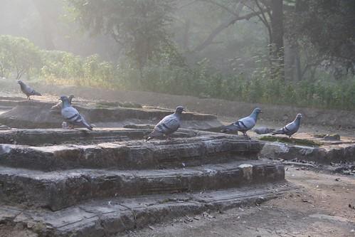 City Monument - Bagh-I-Alam Ka Gumbad, Deer Park