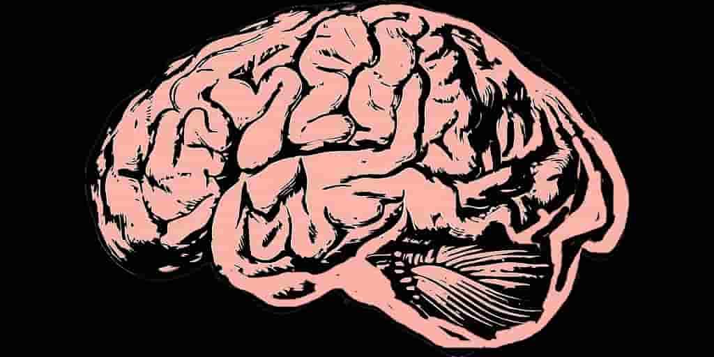 évidence-Parkinson-commence-dans-les-intestins