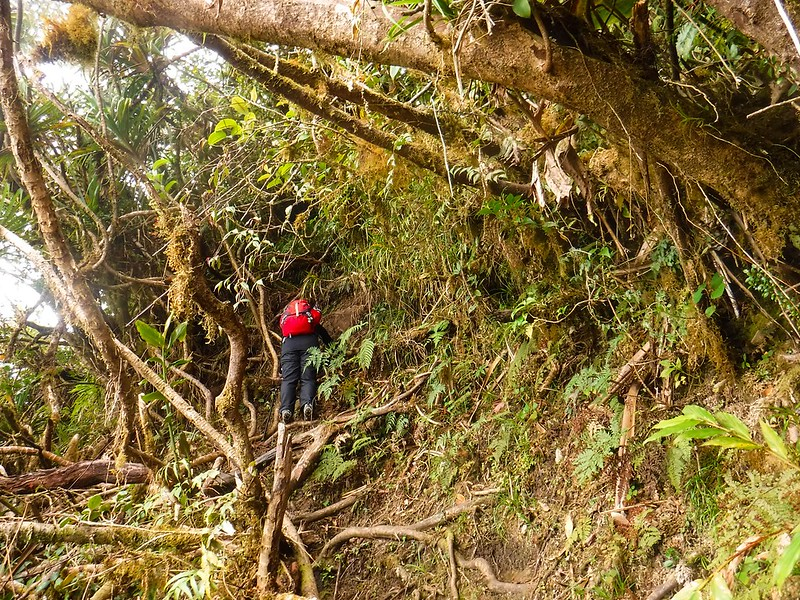 Root climbing