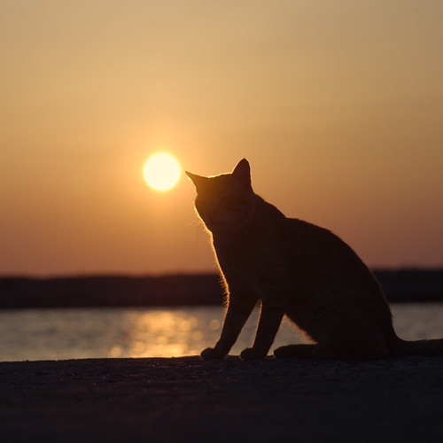 Sunset cat | by Oleg Kr