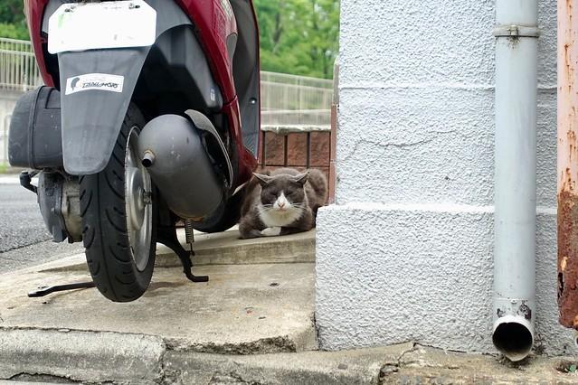 Today's Cat@2019-06-27