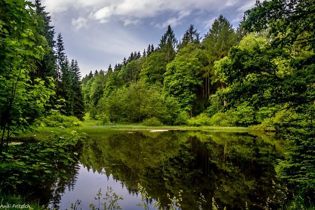 Der Schwarze Teich im Bornwald