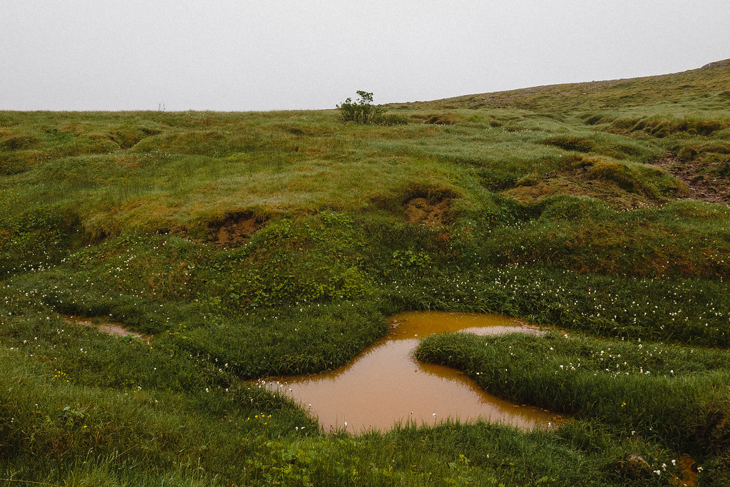Brown puddle in low green vegetation