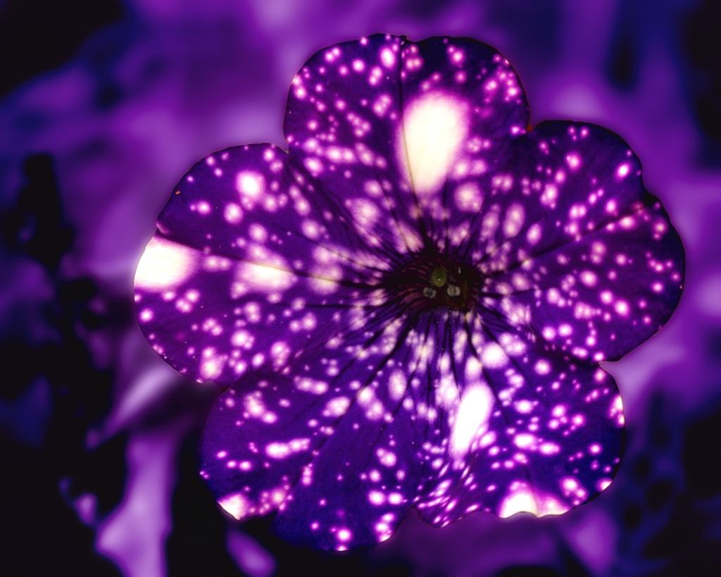 Psychedelic petunia