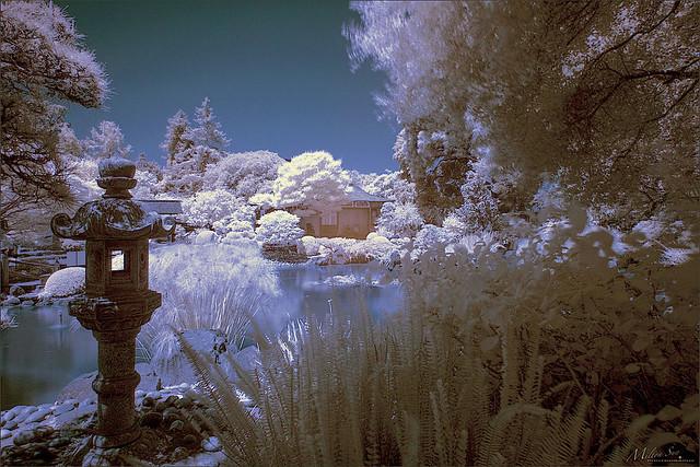 Infrared Japanese Garden