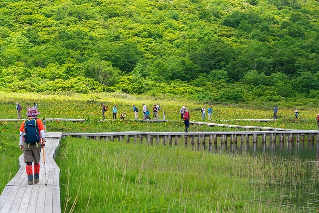 湿原の木道を行く