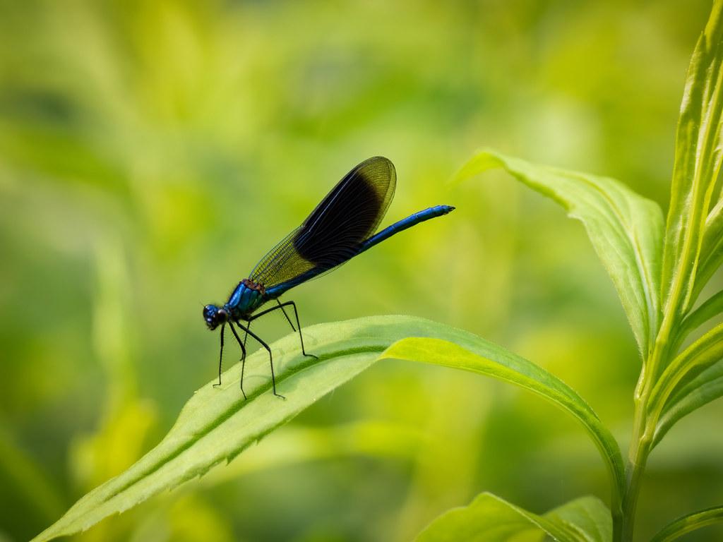 Le garde bleu du Monde Vert... 48141306953_a13f1441e3_b