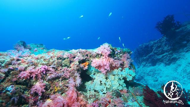 カラフルな珊瑚(水深28m)