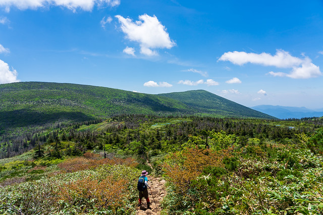 芝草平と屏風岳・南屏風岳を眺めながら下る