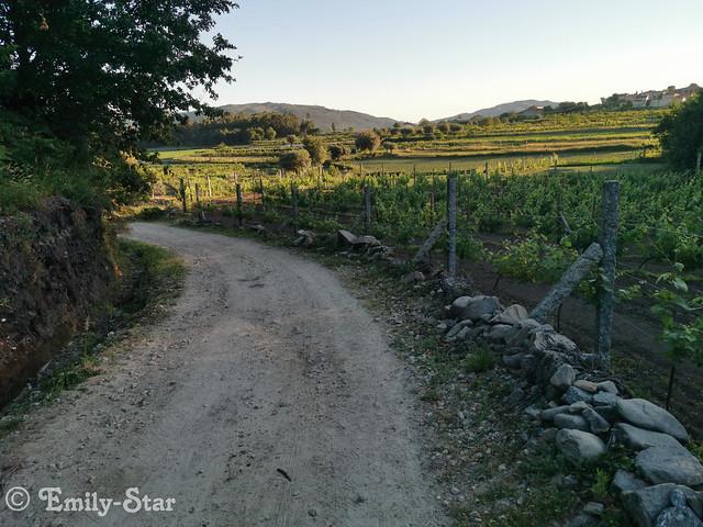 Camino Portugues-070001