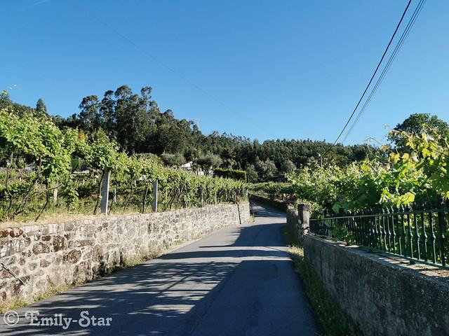 Camino Portugues-080615