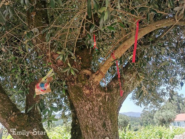 Camino Portugues-134118
