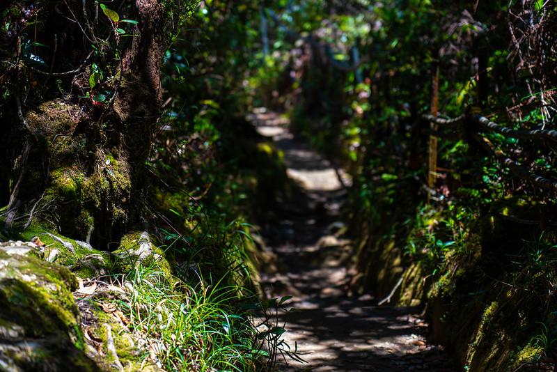 20190505_キナバル山登山(2日目)_0751.jpg