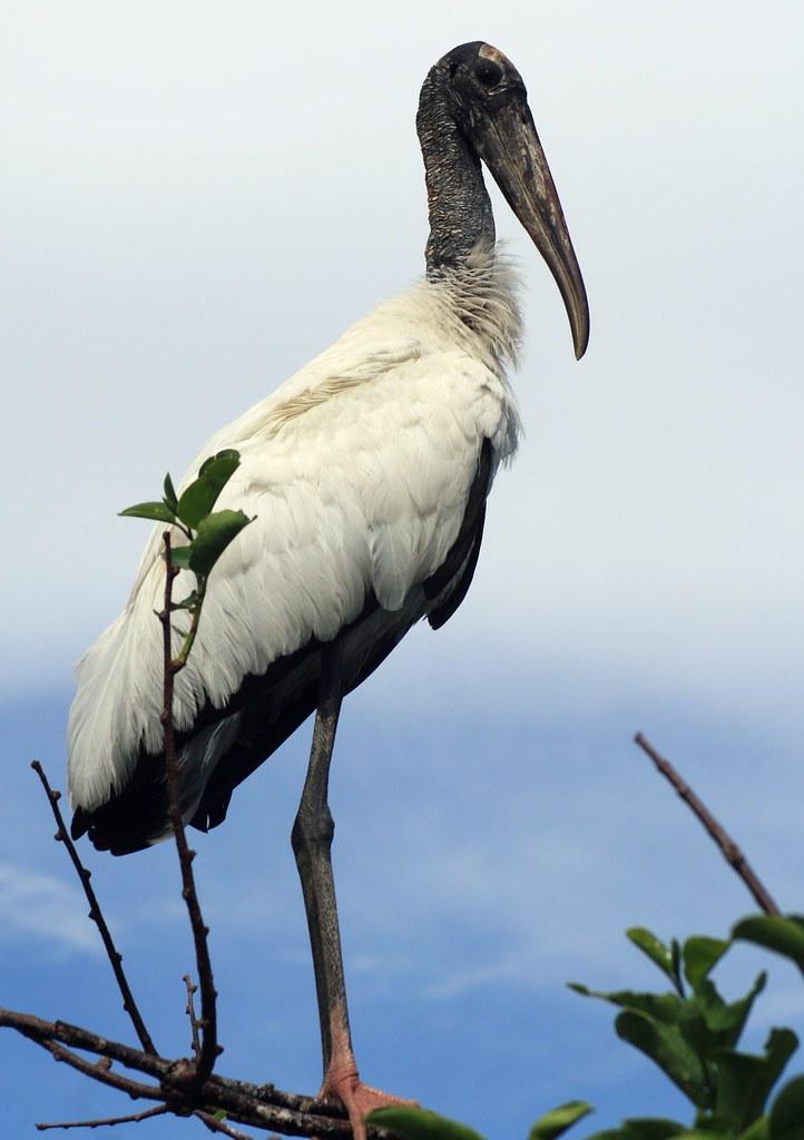 Stoic Stork